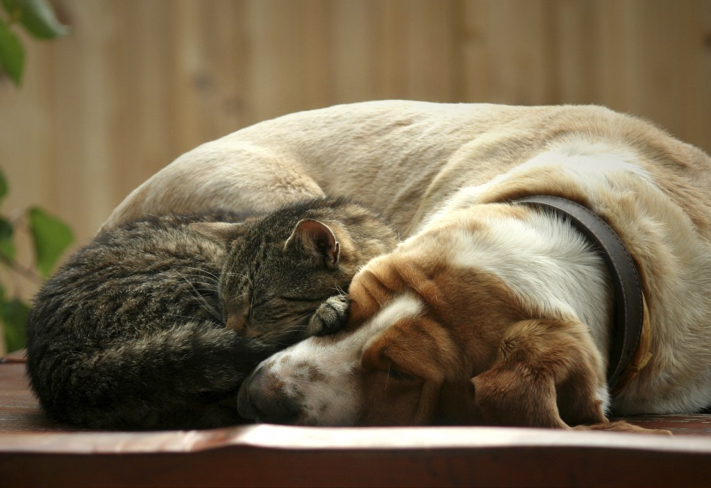 Pet Love - dog and cat