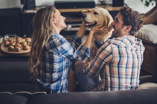 Room-by-Room Guide to Pet-Proofing Your Home