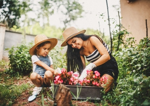 Top 10 Easy-to-Grow Flowers for Beginner Gardeners